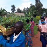 Rwamagana District eyes a Tree Nursery in each cell by 2022